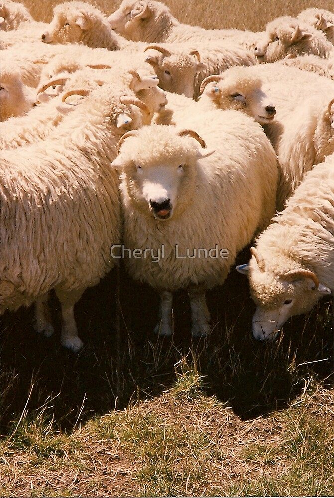 Here's looking at you! by Cheryl  Lunde