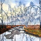 Silver Birch on Skipwith Common by Glenn Marshall