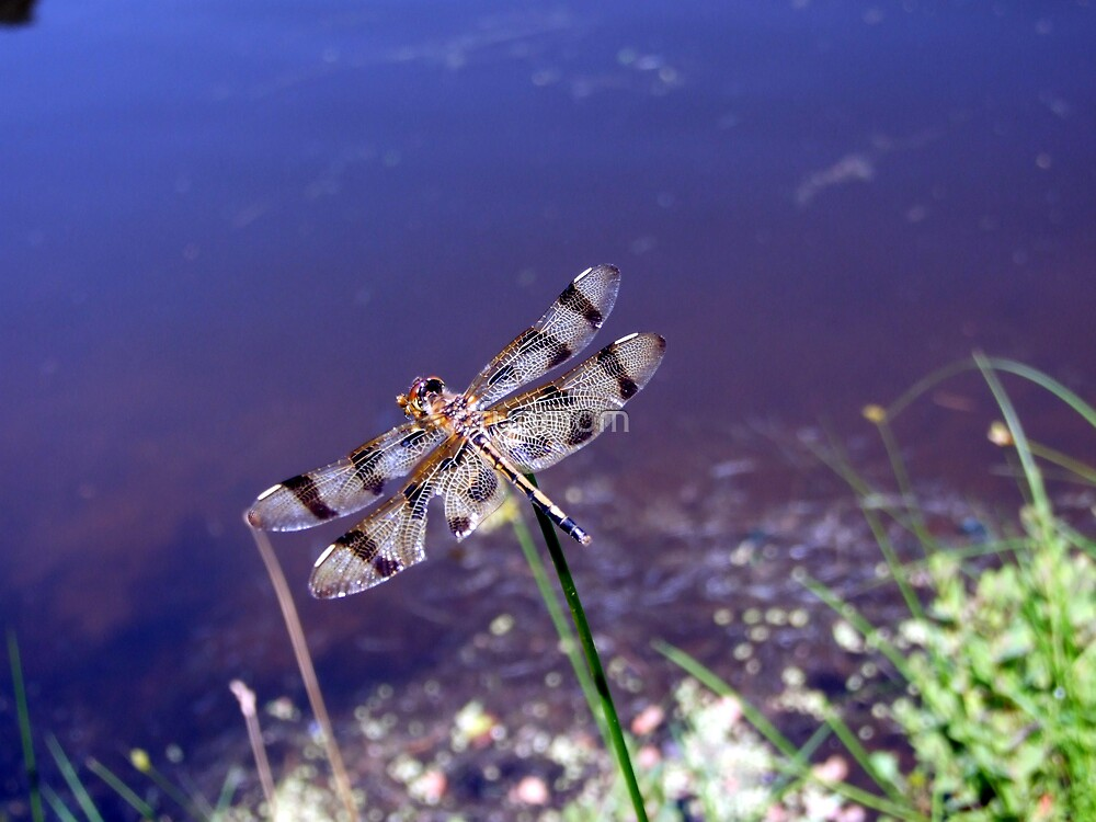 Dragonfly  Pit-Stop by funmom