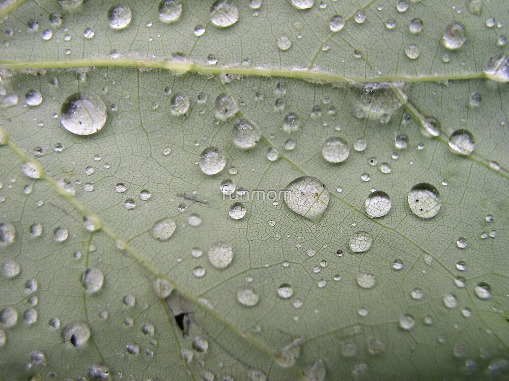 Raindrops on a leaf by funmom