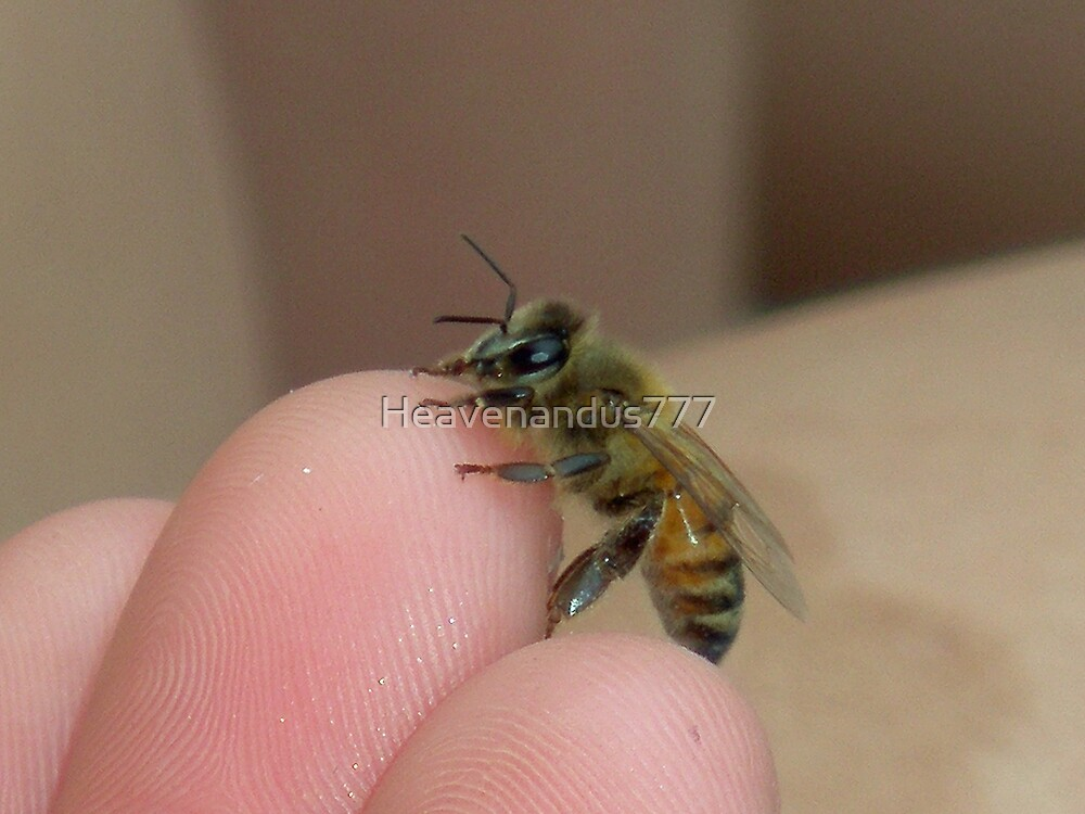 This Bee was Saved by Heavenandus777
