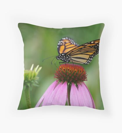 softly landing on an echinacea flower Throw Pillow