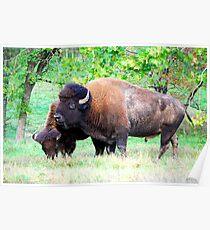 A Couple of Buffalo... Poster