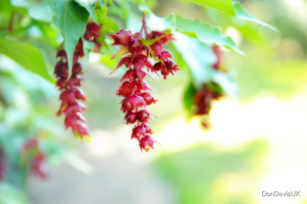 Dangling Berries  by DonDavisUK