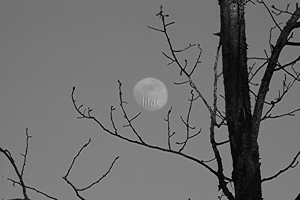 Moon-1 out of 2 by lilac