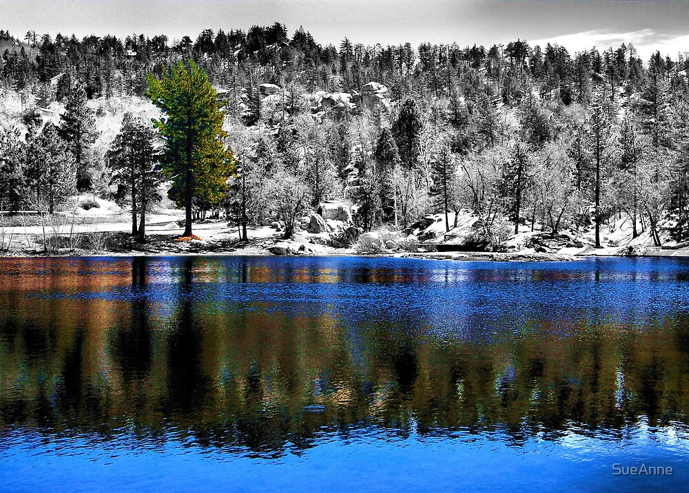 Reflections Of Selective Coloring by SueAnne