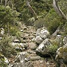 Organ Pipe Track - Mt Wellington by Caro