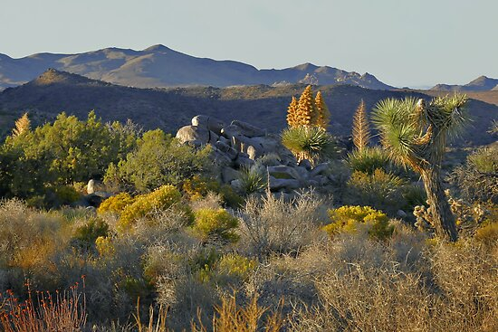 Joshua Tree National Park - A Landscape to Die For by Christine Till  @    CT-Graphics