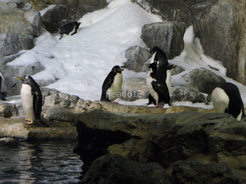 Cold Penquins by peano12