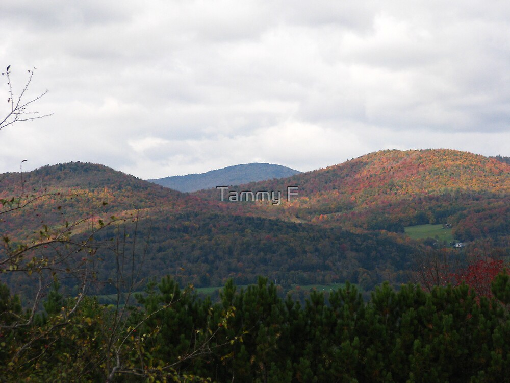 Autumn in the Mountains by Tammy F