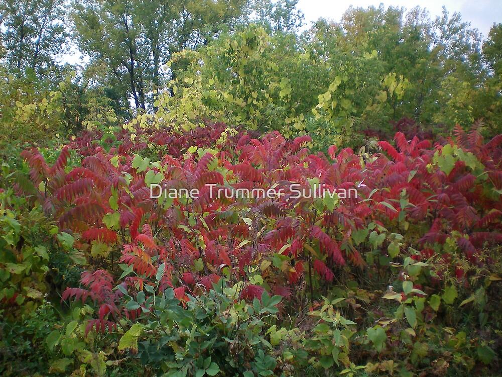 Beautiful Red Sumack by Diane Trummer Sullivan