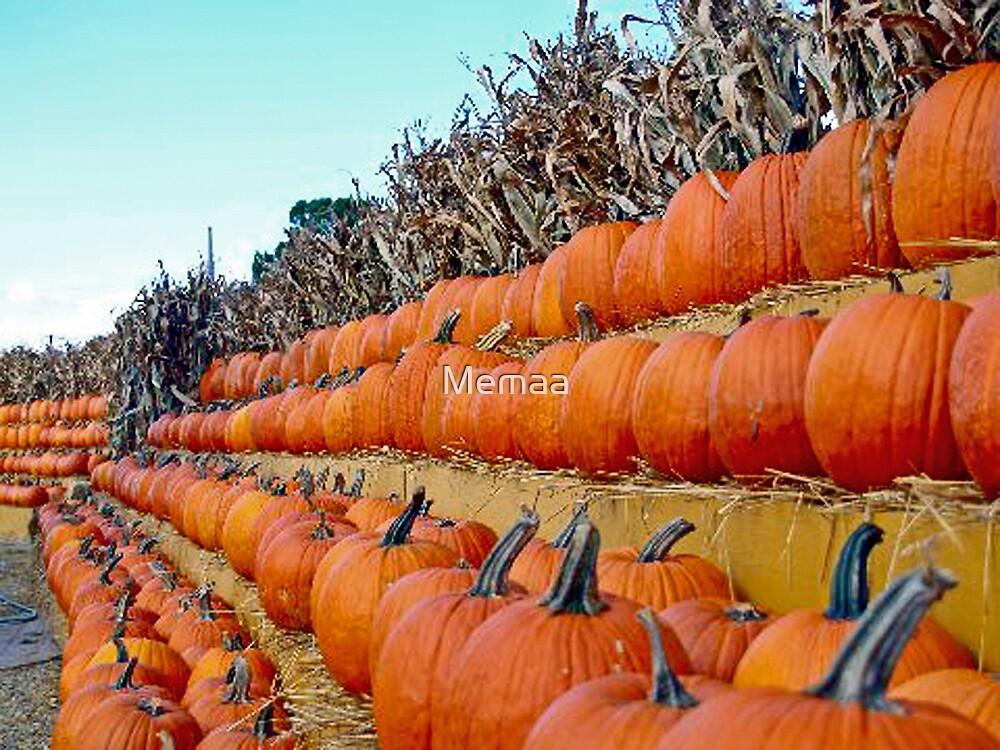 Rows Of Pumpkins by Memaa