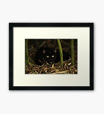 Mary the Cat Framed Print
