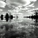Reflections ! by Elfriede Fulda