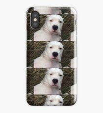 dogo argentino iPhone Case/Skin