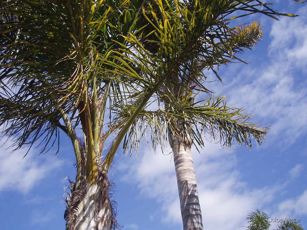 Palm Trees by ChloeAlyce