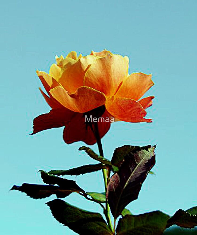 Light Orange Rose by Memaa