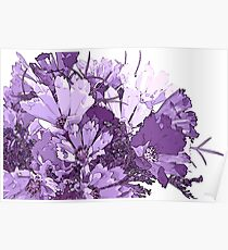 Summer Cosmos In Purple  Poster