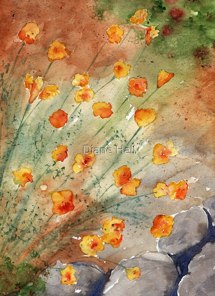 California Poppies by Diane Hall