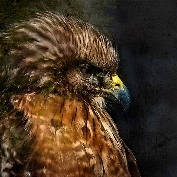 Hawk Eye by DeerPhotoArts