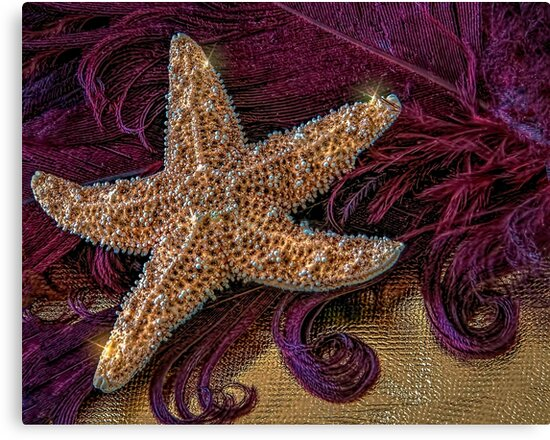 Starfish and Feathers by DeerPhotoArts