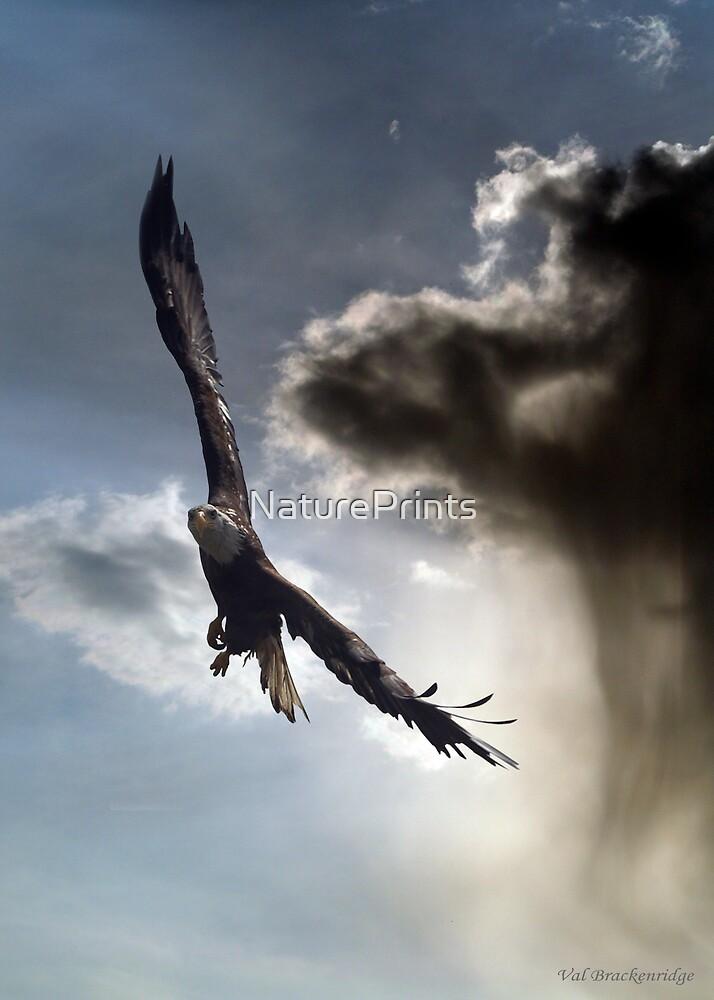 """Sky Warrior"" by NaturePrints"