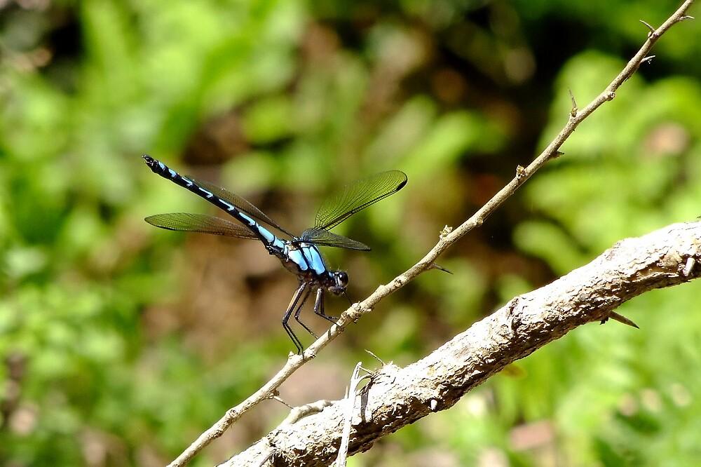 Dragonfly Resting by Trevor Farrell