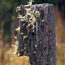 Abandoned Fencepost by Trevor Farrell