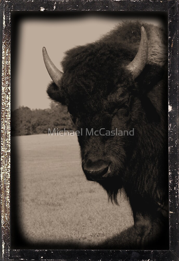 Bison 1885 by Michael McCasland