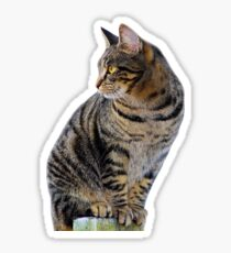 Perched Tabby Cat Sticker