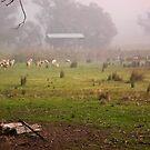 Flock in Fog by TonyCrehan