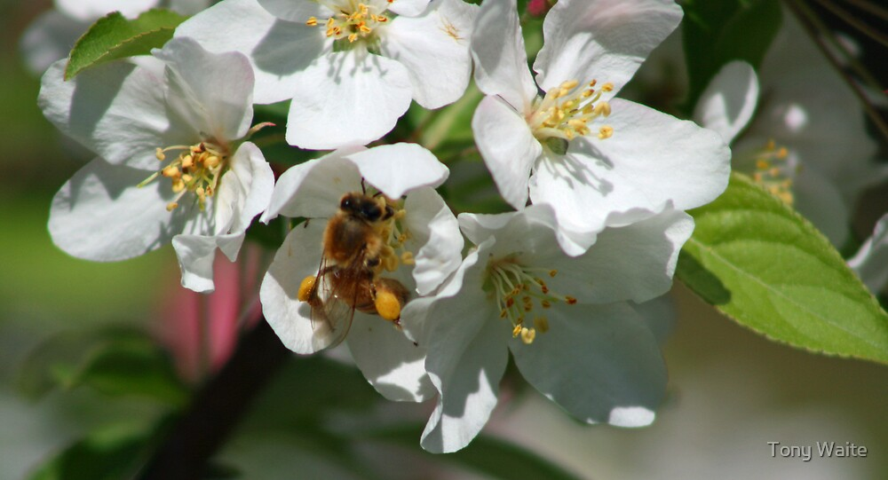 Bee's Knee's by Tony Waite