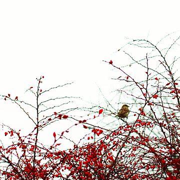 Berry Birds by lusavy