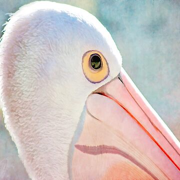 Pelican Up Close by Margi