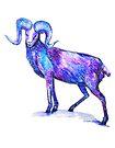 Blue Ram by Linda Callaghan