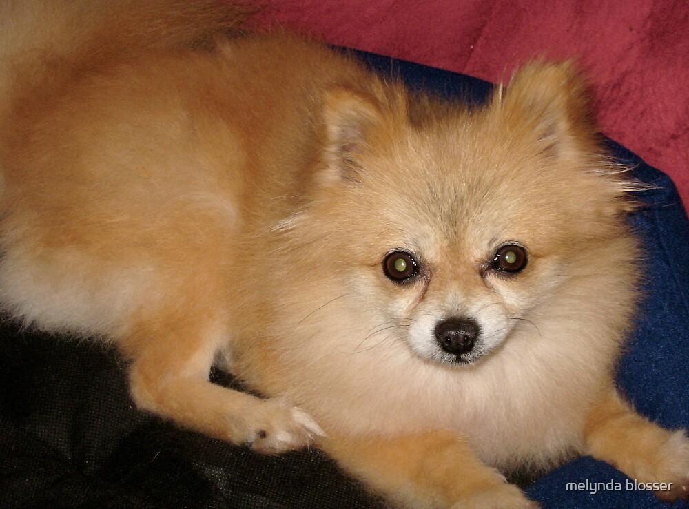 foxy by melynda blosser