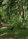 Ducks by Cathy Jones