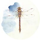 Dragonfly by Alison Rasmussen