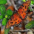 The Butterfly by Virginia N. Fred