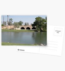 Arizona Pond Where the Swans live ! Postcards