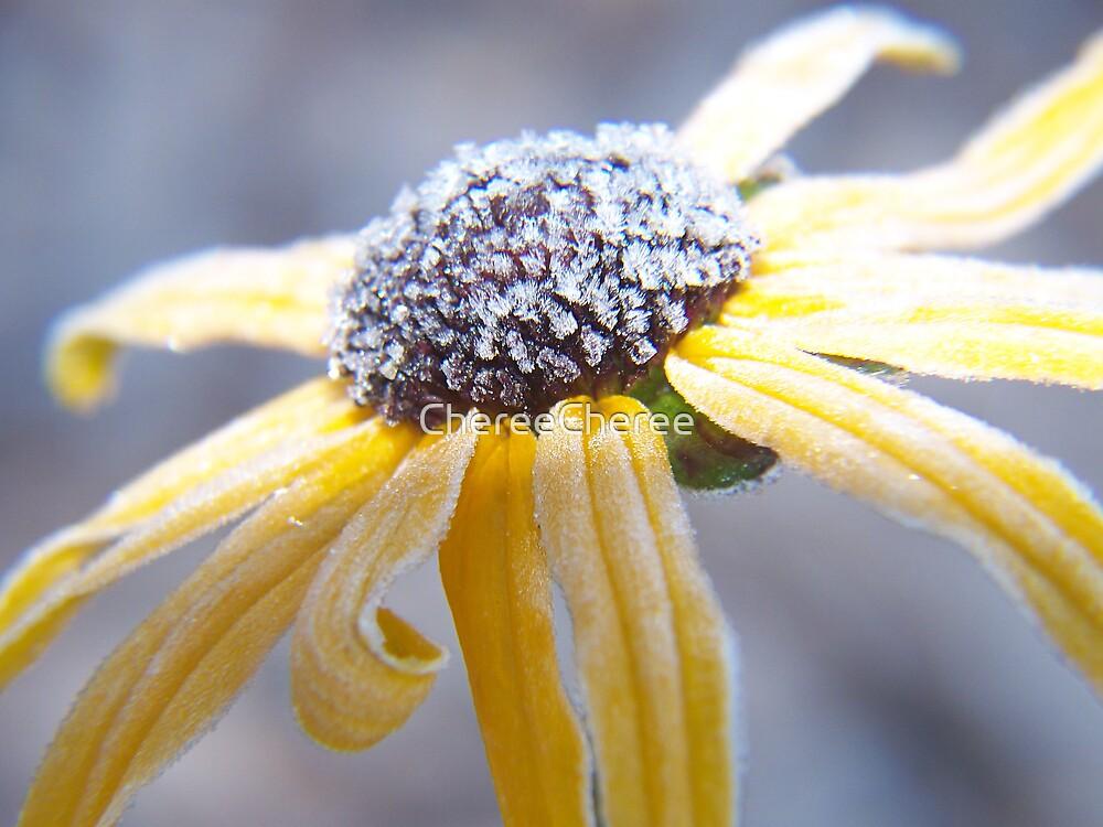 Frosty Flower by ChereeCheree