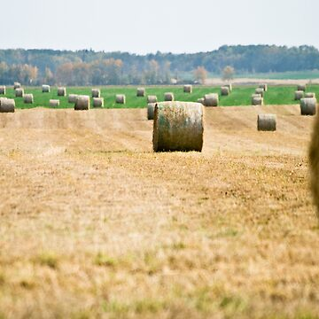 Hay! by eadnams