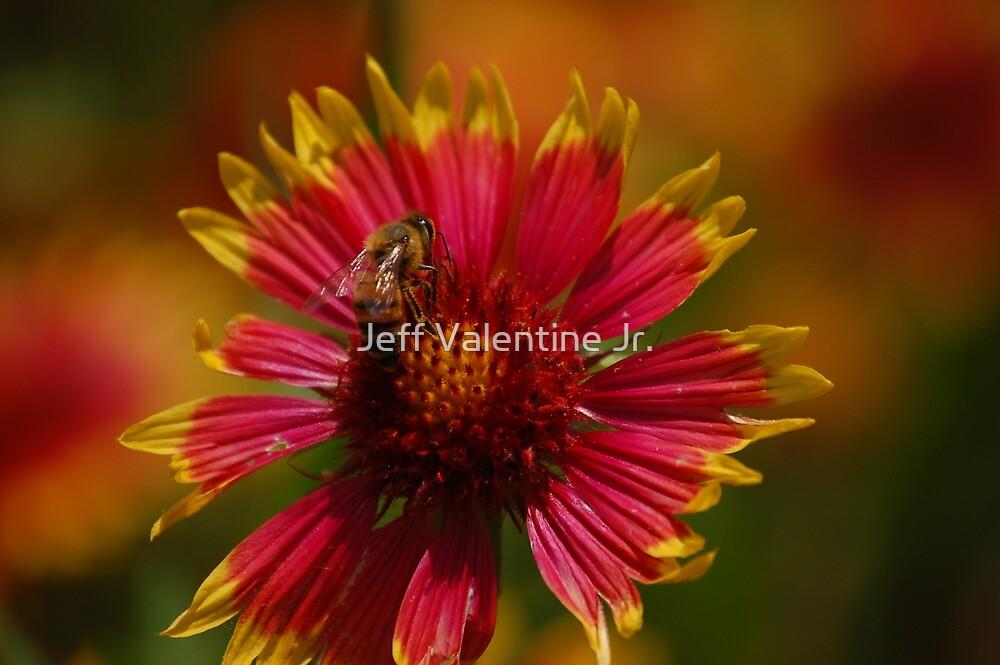 Buzy on a Flower by Jeff Valentine Jr.