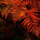 Ferns by newbeltane