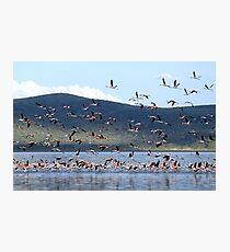 Flight of the Flamingo.....Lake Nakuru....kenya Photographic Print