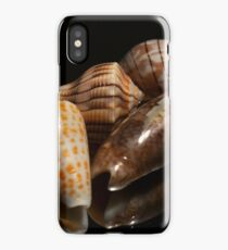 Florida Seashells iPhone Case