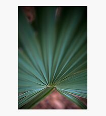 Dwarf Palmetto Sabal – Congaree National Park, South Carolina Photographic Print
