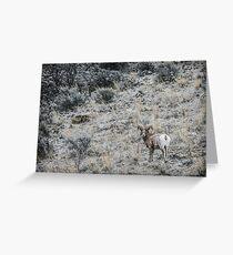 Big Horn Sheep Greeting Card
