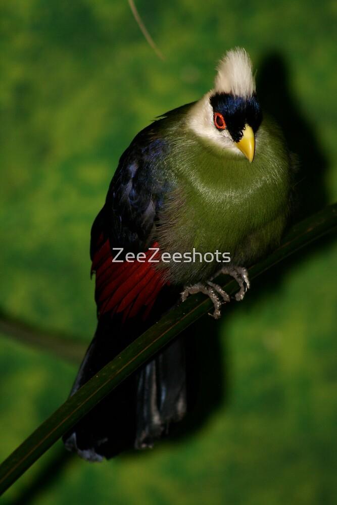 A beautiful Bird! by ZeeZeeshots