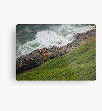 Oregon Coast Sea Lions Metal Print